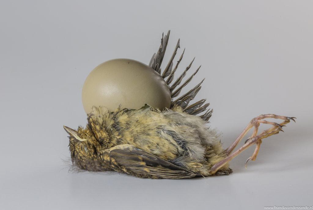 baby-vogel-015.jpg