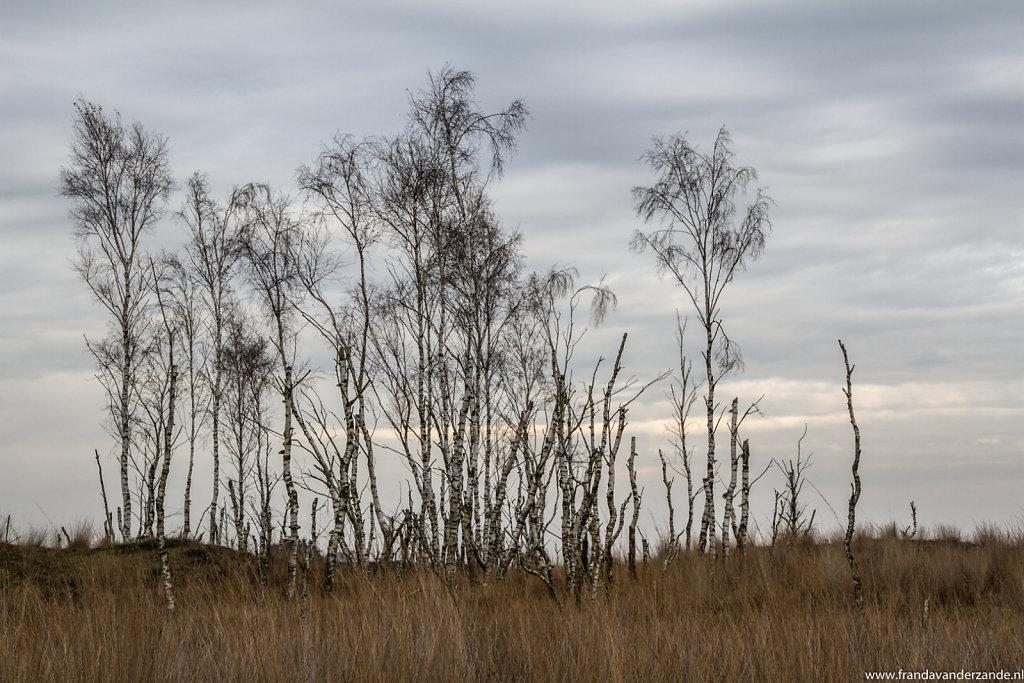 Heide-2-038.jpg
