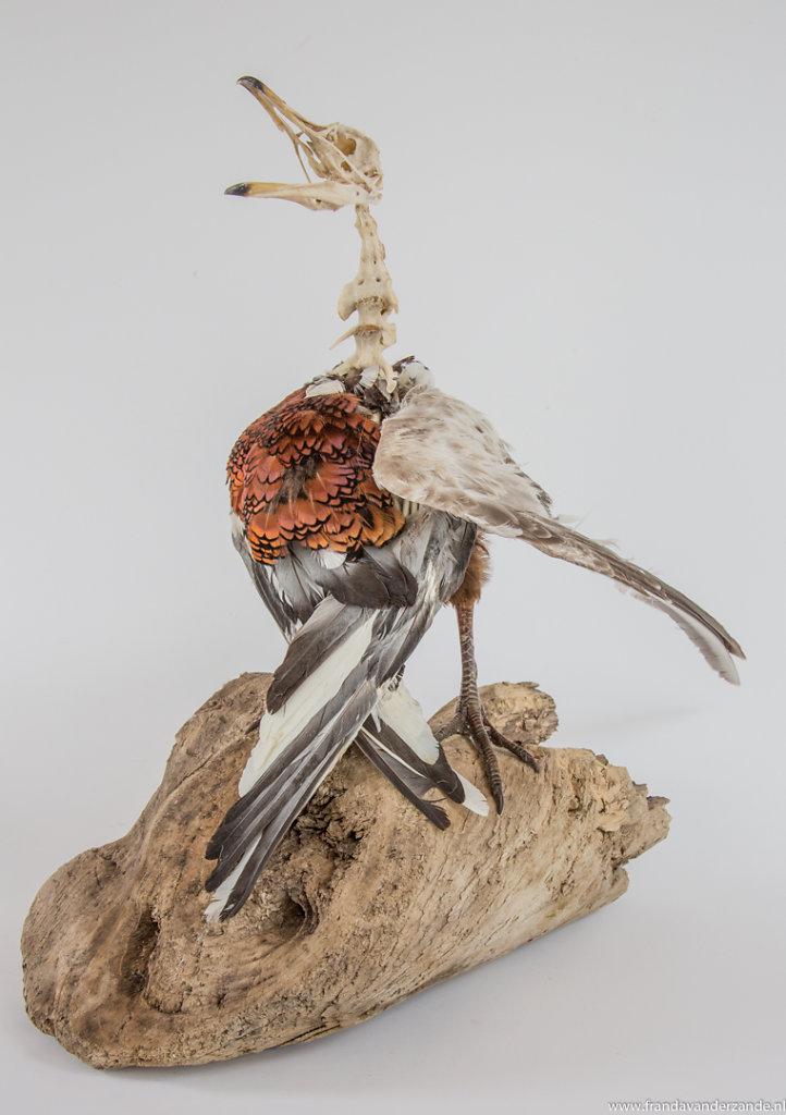Vogelsculpturen-024.jpg